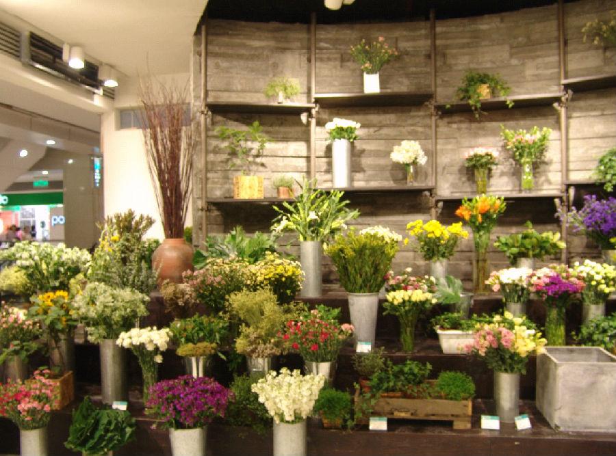 摆放在玻璃橱窗最醒目的地方,第二天免费送给第 一个光临花店的顾客.