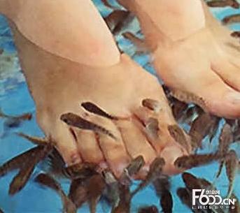 小鱼泡脚加盟