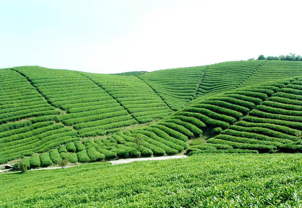 绿茶公司万亩生态观光茶园旅游风景区建设项目可行性论证报告